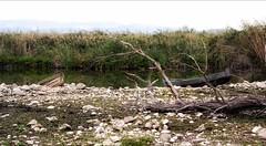 * (PattyK.) Tags: ioannina giannena giannina epirus ipiros balkans hellas ellada greece grecia griechenland lake pamvotida lakepamvotida ioanninalake lakeside lakefront waterfront bythelake water nature landscape october 2019 autumn ιωάννινα γιάννενα γιάννινα ήπειροσ ελλάδα βαλκάνια ευρώπη λίμνη παμβώτιδα λίμνηπαμβώτιδα λίμνηιωαννίνων νερό φύση οκτώβριοσ φθινόπωρο snapseed nikond3100 boats βάρκεσ ακτή