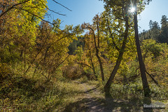 Dugout Gulch Trail (kevin-palmer) Tags: blackhillsnationalforest fall autumn october nikond750 trees foliage color colorful wyoming beulah dugoutgulch tamron2470mmf28 polarizer trail path borealforest blackhills sun sunstar