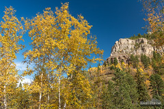 Birch and Cliff (kevin-palmer) Tags: blackhillsnationalforest fall autumn october nikond750 southdakota spearfishcanyon trees foliage color colorful savoy tamron2470mmf28 polarizer blackhills