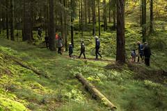 Mushroom hunting (outdoorstudio) Tags: ©jetteoutdoorstudiodk ©jettewfrederiksen skov forest ©outdoorstudiodk svampetur fall efterår autumn mushroomhunting