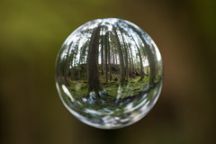 Encapsulated World (Click And Pray) Tags: managedbyclickandpraysflickrmanagr nopeople sphere crystalball argyll scotland ardentinny forest floating distorted tree tranquility woodland nopeoplespherecrystalballargyllscotlandardentinnyforestfloatingdistortedtreetranquilitywoodland