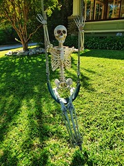 Pasadena Swinger (Thad Zajdowicz) Tags: halloween zajdowicz holiday pasadena california usa skeleton decoration cellphone samsung snapseed availablelight outdoor color green grass tree swing swinger
