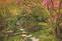 Autumn is here 2019 (TheArtOfPhotographyByLouisRuth) Tags: autumnleaveslandscapeslandscapefallstreecolors nature season