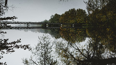 Mirror (BalintL) Tags: upside down mirror lake water autumn bridge trees woods woodland forest hungary deseda