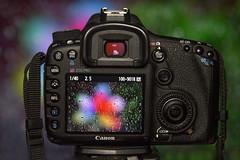 I love it when it rains 😍 (zoz.pro) Tags: 50mm nature rain lens 2470mmii t3i 7d canon