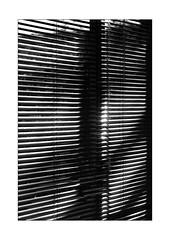 ombres diagonales sur les stores de Véranda (Armin Fuchs) Tags: arminfuchs nomansland véranda lavéranda blinds diagonal stripes shadows anonymousvisitor thomaslistl wolfiwolf jazzinbaggies