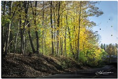 OCTOBER 2019 _374_NGM_3373-1-222 (Nick and Karen Munroe) Tags: leaves leaf wind windy windswept forest tree trees woods hike trail hiking forests wood natural caledon northcaledon fall autumn fallsplendor fallcolours karenick23 karenick karenandnickmunroe karenandnick munroe karenmunroe karen nickandkaren nickandkarenmunroe nick nickmunroe munroenick munroedesigns photography munroephotoghrpahy munroedesignsphotography nature landscape brampton bramptonontario ontario ontariocanada outdoors canada d750 nikond750 nikon nikon2470f28 2470 2470f28 nikon2470 nikonf28 f28 orange yellow colour colours color colors