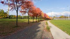 Autumn, automne - Piste cyclable, Québec, Canada - 2106 (rivai56) Tags: autumn automne pistecyclable québec canada 2106 belles couleurs de lautomne à luniversité laval