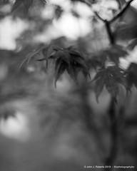 Nikkor-S.C. 55mm f/1.2 B&W (JRPhotographyBC) Tags: