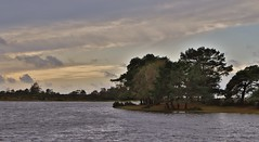The Hatchet Pond (MedievalRocker) Tags: lakepond water newforest trees clouds
