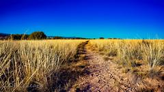 Path through Prairie Grass (LDMcCleary) Tags: