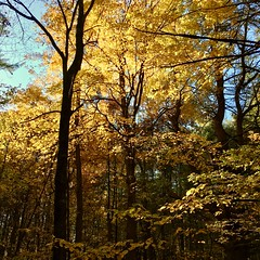 Maples (Jorn Ake) Tags: hillsdale forest trees bugs snakes