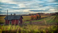 All quiet... (BigWhitePelican) Tags: helsinki finland haltialantila morning fields landscape canoneos70d adobelightroom6 niktools 2019 september