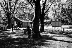IMG_3595 (titanium22) Tags: 東京 代々木公園 tokyo yoyogipark ray