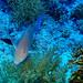 poissons divers-2019-10-09-2