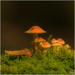 Dans les sous bois !! (thierrymazel) Tags: champignons mushrooms bokeh pdc dof profondeur de champ automne autumn foret sousbois
