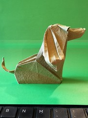 Nando the dog - Riccardo Foschi (Stefano Borroni (Stia)) Tags: origami origamipaper origamicdo origamilove origamiart piegarelacarta arte folding foldingpaper papiroflexia carta animali natura wwf cane dog origamiitalia convegnocdo italy paper cdo2019 tirrenia
