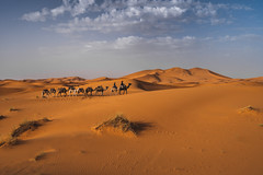 Sahara Desert (CROMEO) Tags: sahara desert merzouga morocco marruecos desierto yellow sand photo photography capture cromeo pic sony a7iii fullframe view nature naturaleza landscape camel trip travel africa heat walking around sunny