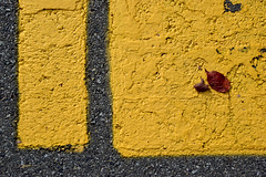 Parking lot still life (James_D_Images) Tags: autumn fall red leaves foliage fallen parking lot crosswalk yellow lines paint weathered asphalt texture