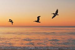 Libertad (José Ramón de Lothlórien) Tags: playa beach loscabos baja bajacalifornia mar sea alor tranquilidad relajacion flores plantas nature landscape paisaje flor flower flowers bee abeja costa