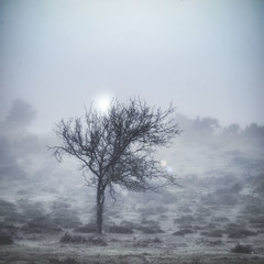 Tree 1 (ndphotographi) Tags: trees tree foggy misty newforest morning stand alone moody atmospheric national nationalpark sun flare fog mist beaulieu hampshire