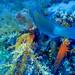 poissons divers-2019-10-09