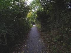 The Dart Valley Trail (Phil Gayton) Tags: path fence wall undergrowth hedge tree dart valley trail totnes devon uk