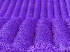 P1120948 (alainazer) Tags: valensole provence france fiori fleurs flowers fields champs colori colors couleurs lavande lavanda lavender