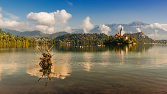 Lake Bled (a7m2) Tags: bled lake sloveneblejskojezero uppercarniola gorenjska pokljukaplateau island stmaryschurch natur urlaub erholung holydays wassersport rudern wassewrvögel blejskigrad
