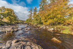 Autumn on the River Tees at Forest in Teesdale Oct 2019 (Richard Laidler) Tags: aonb areaofoutstandingnaturalbeauty autumn autumncolour autumncolours autumntints bluesky bright clouds conifers deciduous fall fine forestinteesdale globalgeopark landscape longdistancefootpath northeastengland northpennines northpenninesaonb pennine pennineway rivertees riverbank riverbanks rocks sunny sunshine teesdale teesdalelandscape trees upper upperteesdale whiteclouds