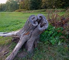 Stump (olaf_alien) Tags: russia moscow kuzminkipark stump landscape nature flora grass green dead tree bush autumn field россия москва кузьминки nikon d3200 nikkor 1200 2400 mm f40 olafalien