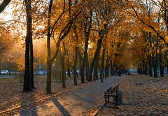 autumn in Donetsk (SergeyGorodnichev) Tags: autumn donetsk city городской пейзаж orange yellow landscape nature