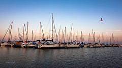 (zedspics) Tags: balatonfenyves magyarország hungary hongarije balaton ungarn plattensee zedspics 1910 sailing boat shipyard autumn