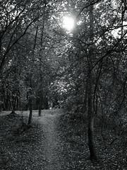 weak autumn sun (Amselchen) Tags: tree monochrome plants blackandwhite bnw mono forest woods light shadow monotone panasonic dcgx9 15f17 black season autumn lumixg25f17 dof depthoffield