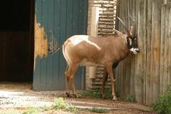 Buffalo Zoo (Tiger_Jack) Tags: buffalozoo buff