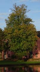 Bright morning moon (Phil Gayton) Tags: morning moon tree sky cloud river dart totnes devon uk