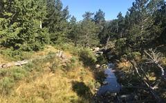 Bois du Commandeur, Mont Lozère - IMG_7331 (6franc6) Tags: occitanie languedoc gard cévennes août 2019 rando vélo kalkoff sansvae 6franc6