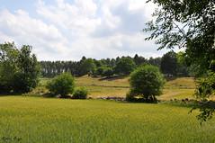 Swedish summer landscape (2) (DameBoudicca) Tags: sweden sverige schweden suecia suède svezia スウェーデン summer sommar sommer verano été estate 夏 skåne