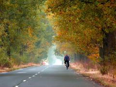 Autumn on the street (Dumby) Tags: landscape ilfov românia street portrait autumn fall colors nature outdoor