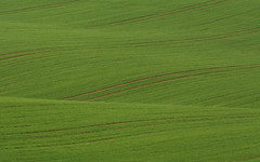 Minimalist Field Waves (Martin Vorel minimaliphoto.com) Tags: abstract agriculture background calm clear close up countryside detail ecology environment farm fields green harvest landscape line minimalism nature outdoor pattern rural scenery season summer wallpapers field outdoors day scene no people minimal minimalist