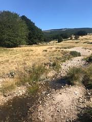 Le Malpertus affluent du Tarn au fond le Pic Cassini (1681m) - IMG_7333 (6franc6) Tags: occitanie languedoc gard cévennes août 2019 rando vélo kalkoff sansvae 6franc6