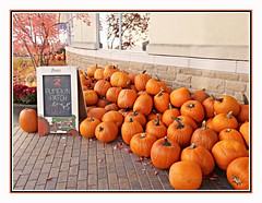 Pumpkin Patch (bigbrowneyez) Tags: pumpkins pumpkinpatch display pretty autum fall leaves trees celebration colourful bright dof fun nature natura bello bellissimi alberi chancesr window bricks building reflections branches outdoors
