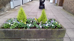Flower trough in Huntingdon just planted up 16th October 2019 001 (D@viD_2.011) Tags: flower trough huntingdon just planted up 16th october 2019