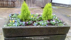 Flower trough in Huntingdon just planted up 16th October 2019 002 (D@viD_2.011) Tags: flower trough huntingdon just planted up 16th october 2019