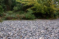 Steine und Gebüsch! (Anna Abendroth) Tags: rügen island ostsee insel balticsea