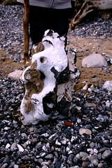 Größter Hühnergott (Anna Abendroth) Tags: rügen island ostsee insel balticsea
