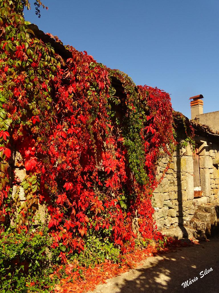 Águas Frias (Chaves) - ... As folhas flamejantes, descendo do telhado e cobrindo as belas paredes de granito de uma casa (que já teve, dentro, muito movimento ...