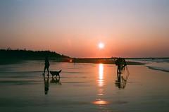 Capture the sun. (蒼白的路易斯) Tags: sunset landscape film fujifilm yashicaelectro35gsn 底片攝影 底片