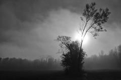 Sad day.... (Evim@ge) Tags: brume mist brumeux misty grésivaudan vallée plaine brouillad fogg foggy arbres lumière light lighty outside extérieur balade paysage nature arbre sun soleil tree fall automne bw noiretblanc white