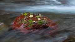 Red (Matthew James Lewis) Tags: washingtonstate water washington red rocks longexposure landscape leaves bigquilvalley bigquilceneriver beauty moss fall river olympicnationalforest olympicpeninsula